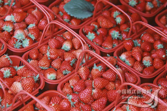 """草莓,让章安农民遇见""""莓""""好生活"""